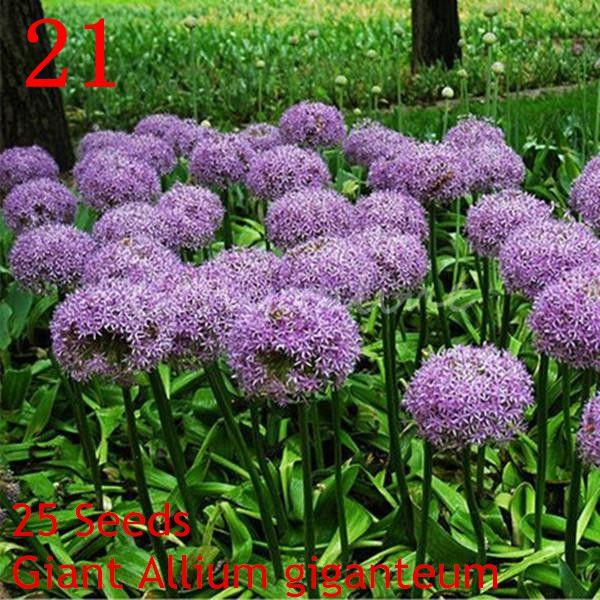 Garten Bepflanzen Blumen ? Performal.info Gemuse Im Spatsommer Sorten Garten Tipps