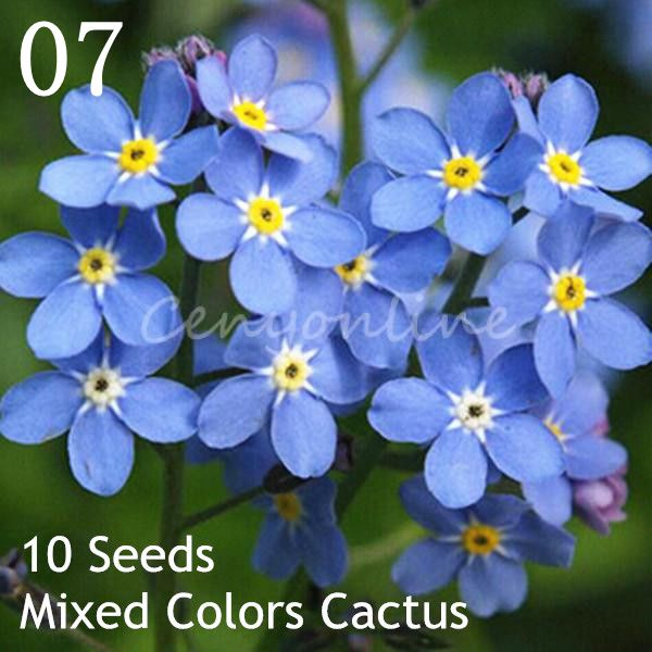 garten pflanzen blumen kaktus rasen gemüse samen saatgut 53 sorte, Garten und Bauen