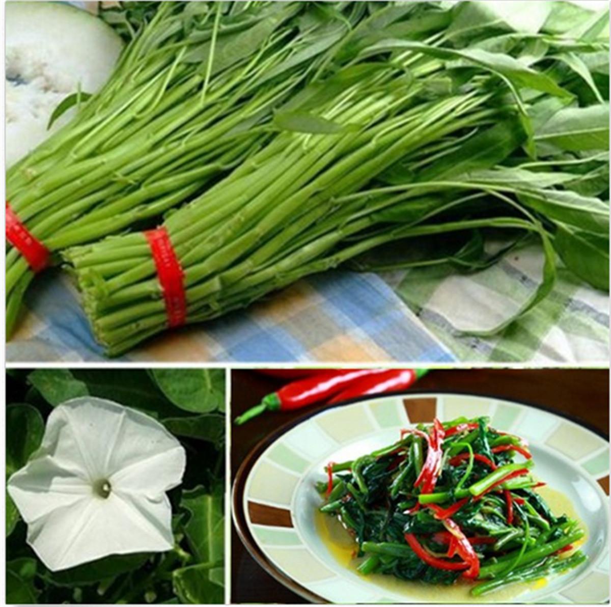 Acquista 4 ottenere 1 gratis 40 tipi di verdure frutta for Semi orchidea