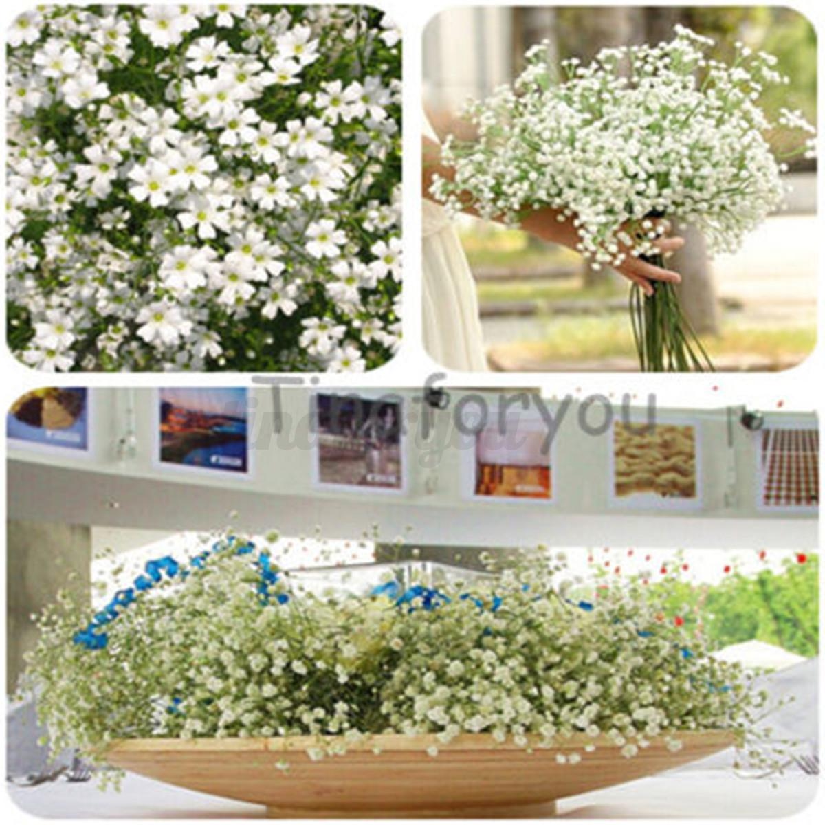 Variete de fleurs de jardin meilleures id es cr atives pour la conception de la maison for Palissade jardin gamma