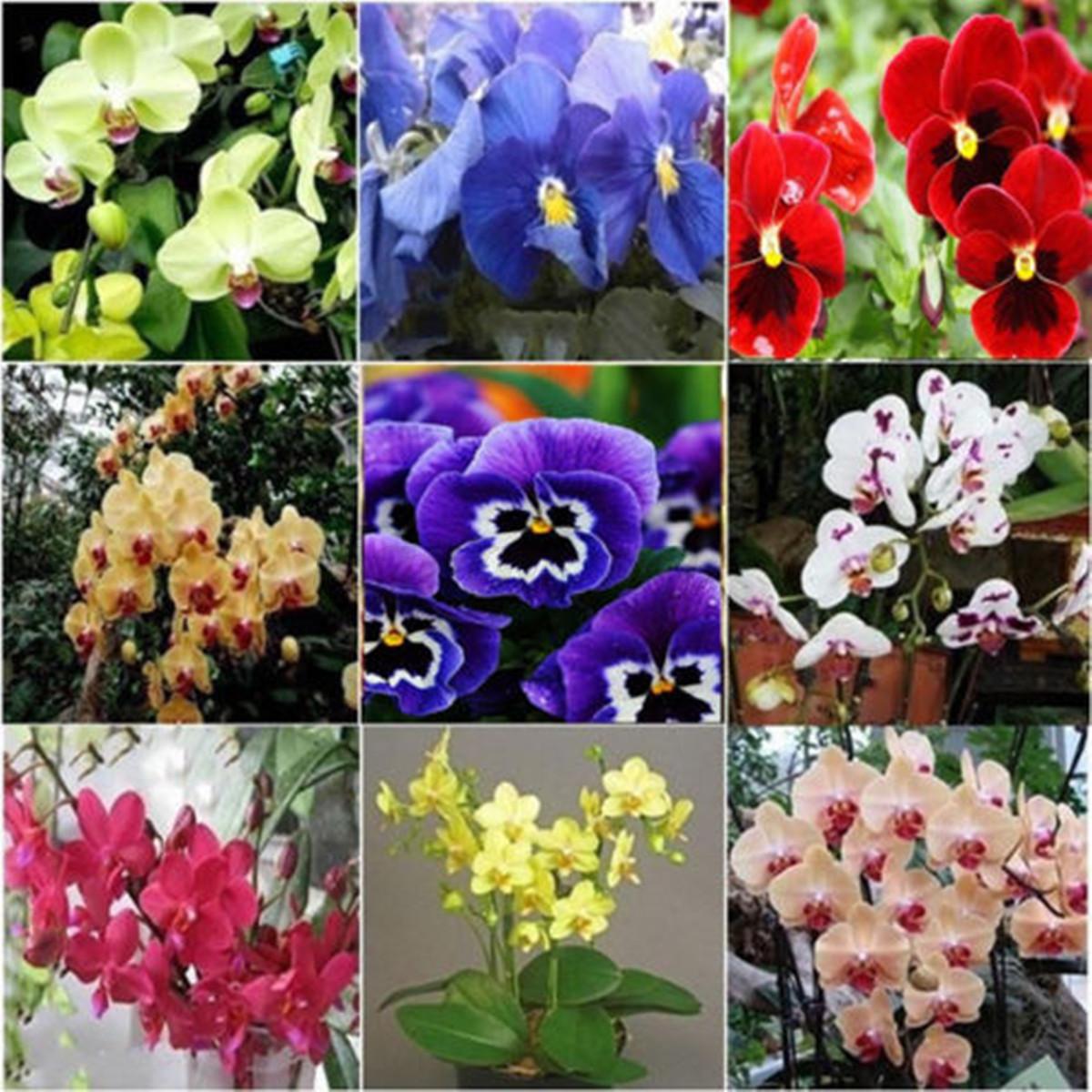 Graines de fleurs semer plante jardin seed m lange sauvage for Graine de jardin