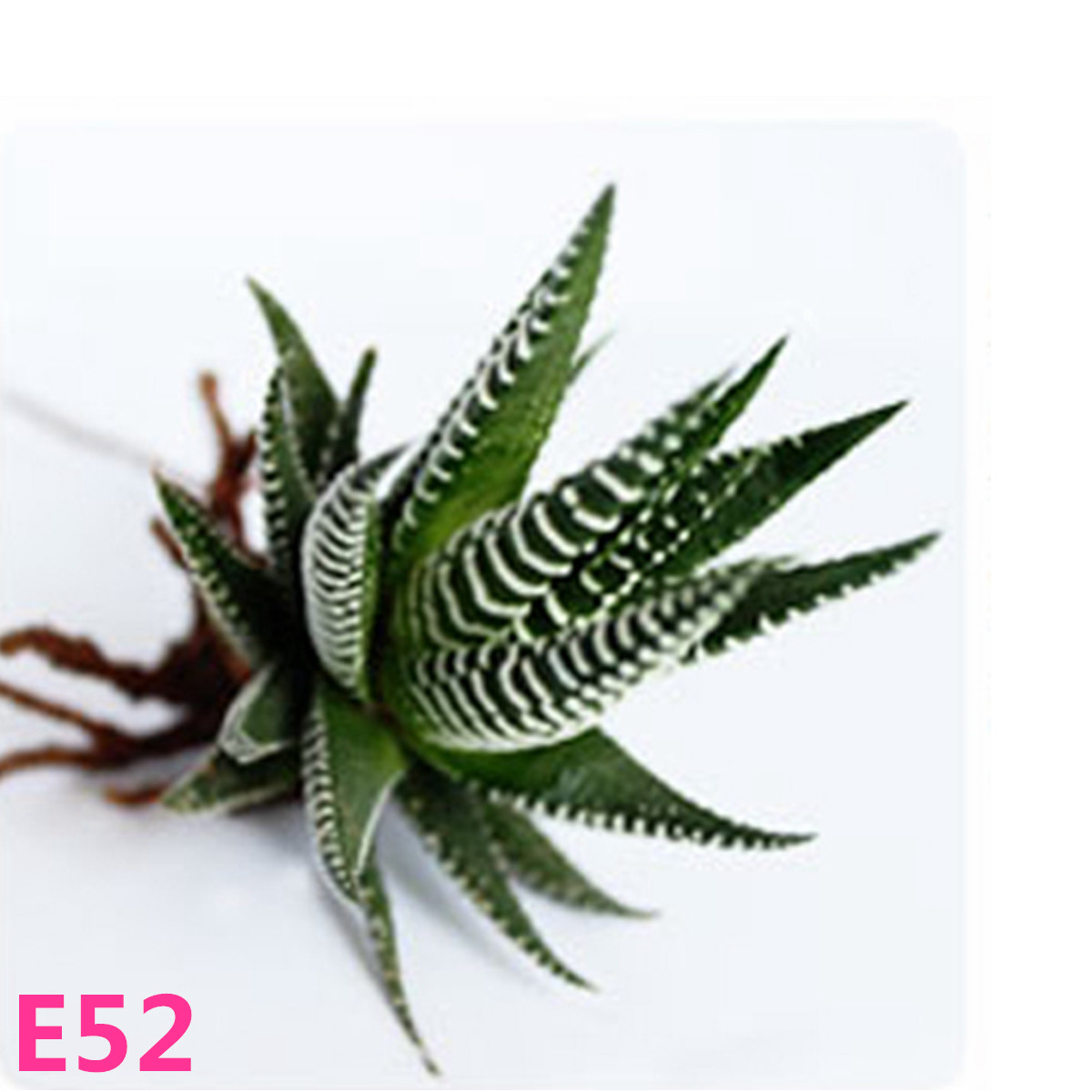 21 Kinds Succulents Seeds Potted Flower Seeds Office Home Balcony Decorative Hot