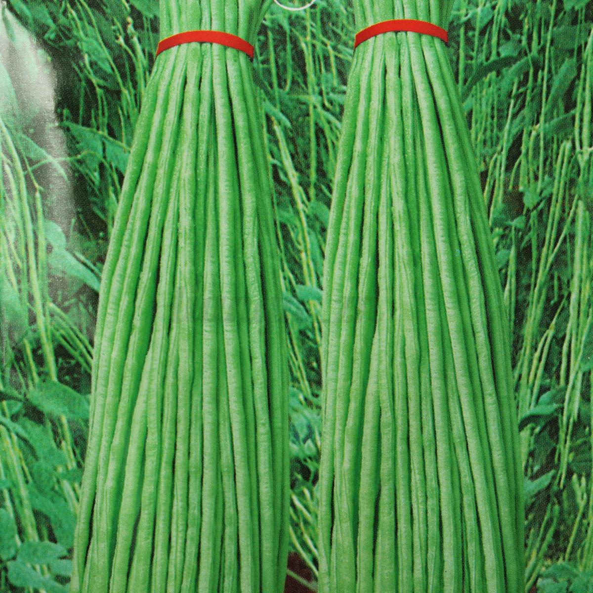 20pcs graines de haricot vert pr coce cowpea seeds vegetables l gumes potager ebay. Black Bedroom Furniture Sets. Home Design Ideas