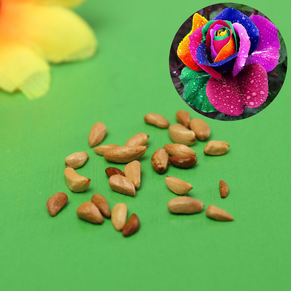 20pcs rare colorful rainbow rose seed flower seeds for