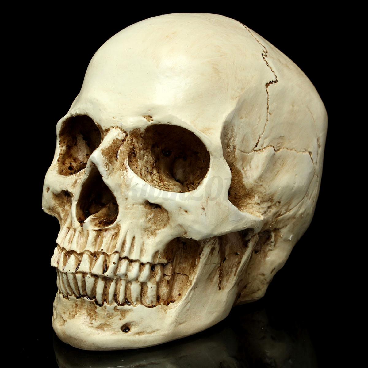Lifesize 1:1 Resin Replica Real Life Human Anatomy Skeleton Skull ...