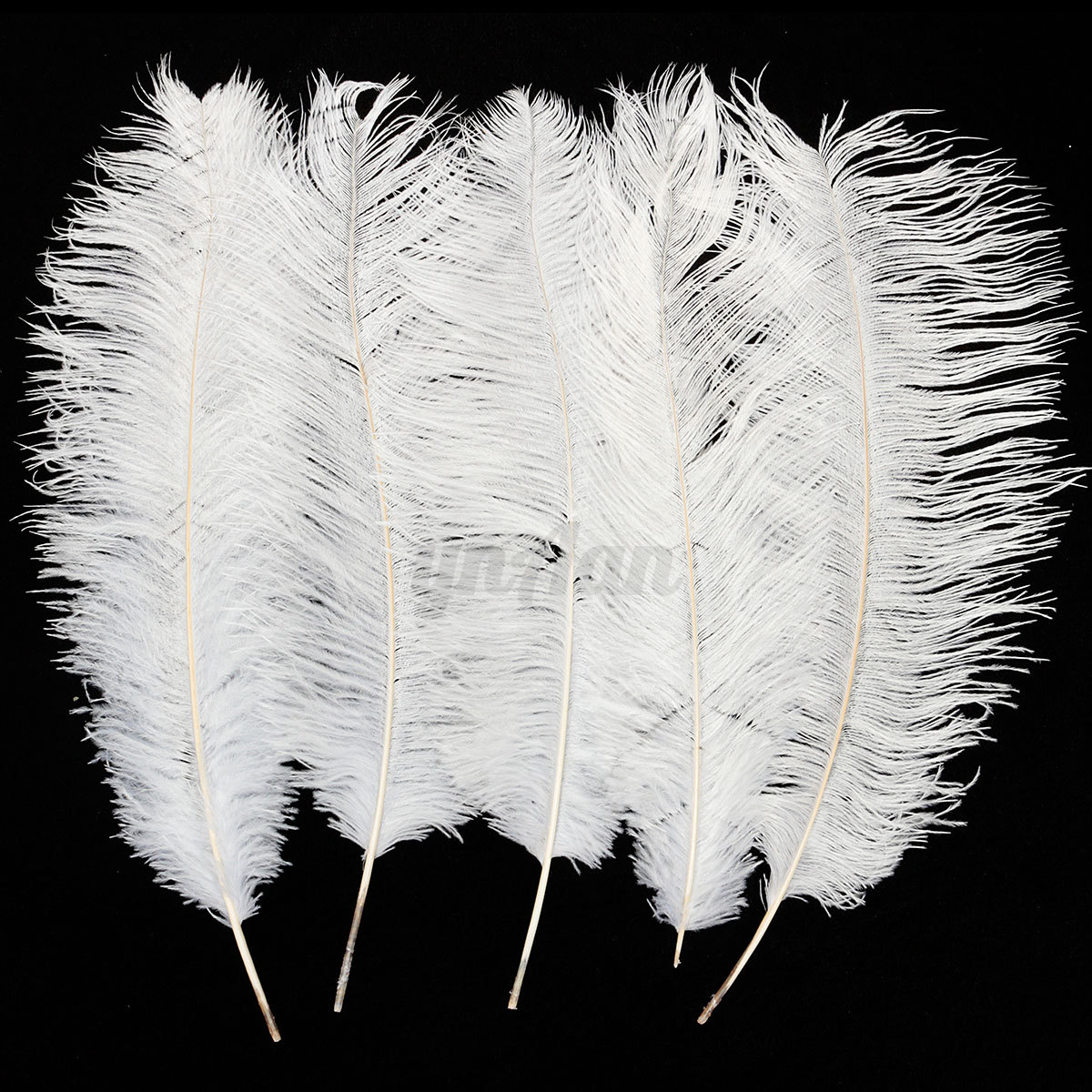 5pcs wholesale real large ostrich feathers for craft