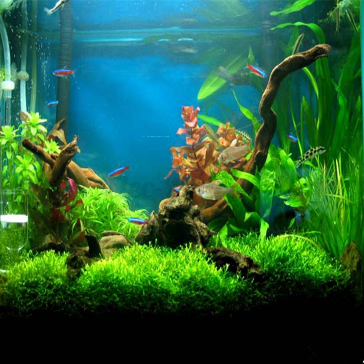 Aquarium fish tank underwater driftwood tree root stump for Fish tank tree