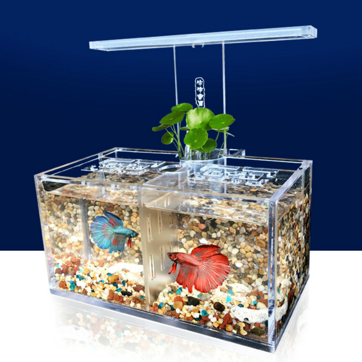 Large acrylic clear fish tank led light betta desktop for Desktop fish tank