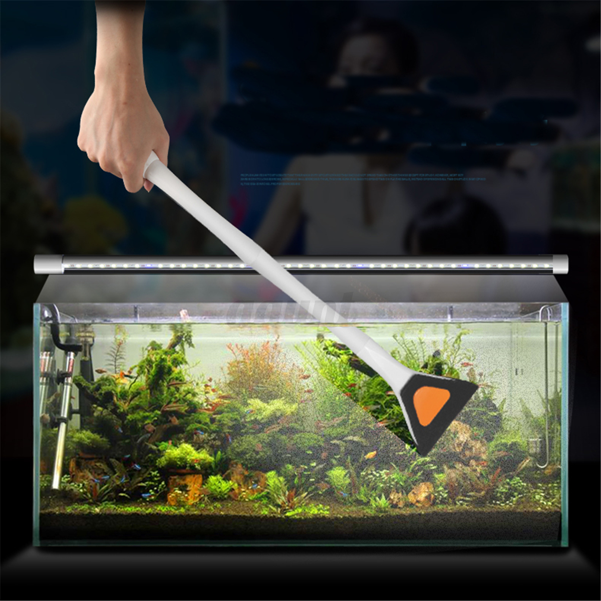 how to remove algae from fish tank plants