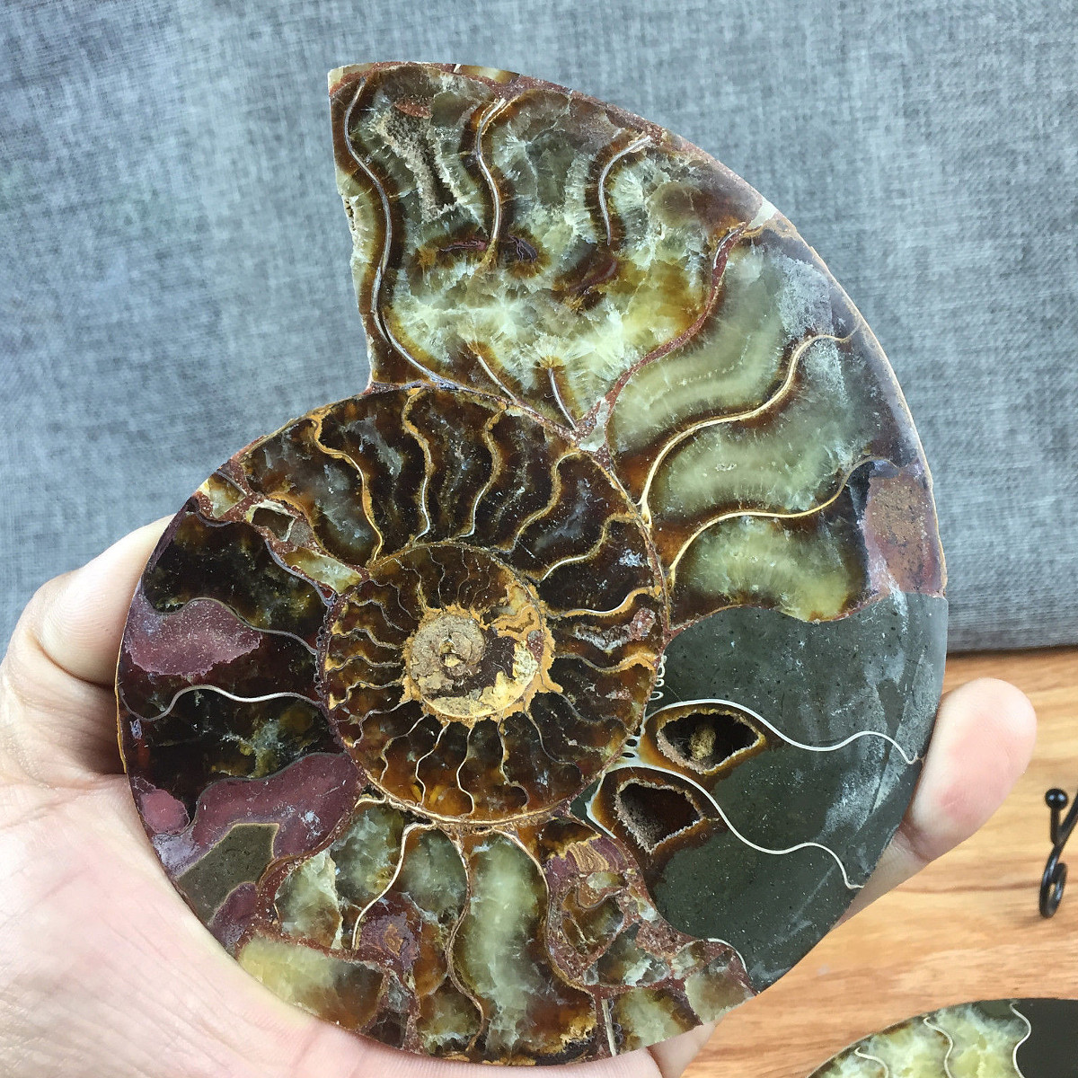 1pc-Large-12cm-Natural-Ammonite-Fossil-Sea-Conch-Crystal-Specimen-Slice thumbnail 6
