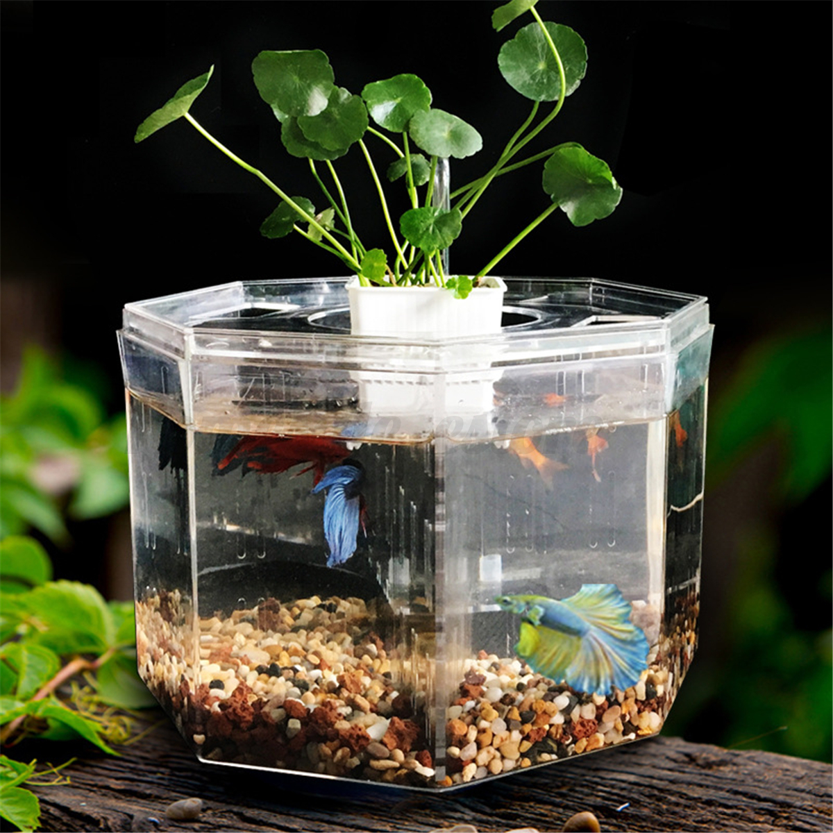 mini clear acrylic betta aquarium fish tank breeding