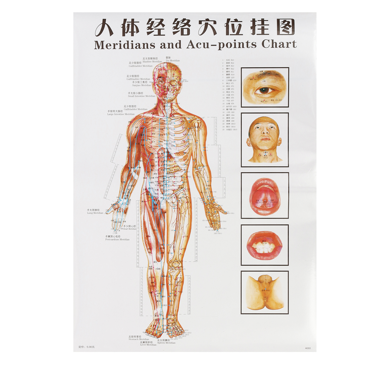 7pcs English Acupuncture Meridian Acupressure Points Manual Guide