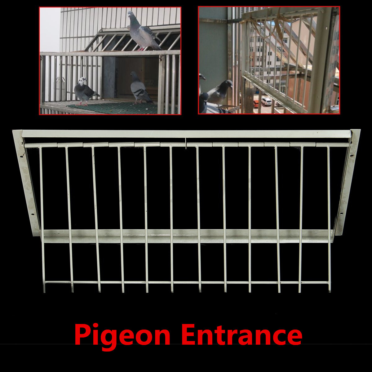 Wires Bars Frame Racing Pigeon Entrance Fantail Tumbler Loft Bird Supply. Source .