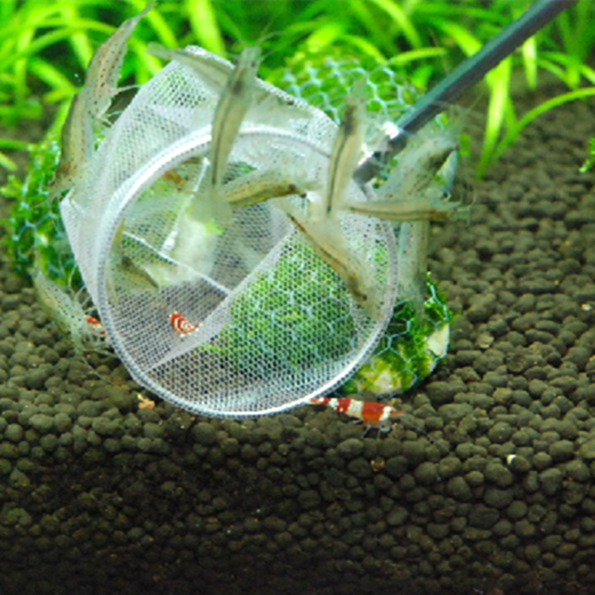 Aquarium small betta tetra fish catching 3d shrimp net for Fish catching net