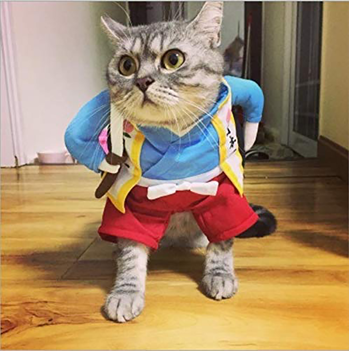 Cat-Dog-Tops-Clothes-Costume-Cool-Christmas-Halloween-Costume-Pet-Clothes thumbnail 2