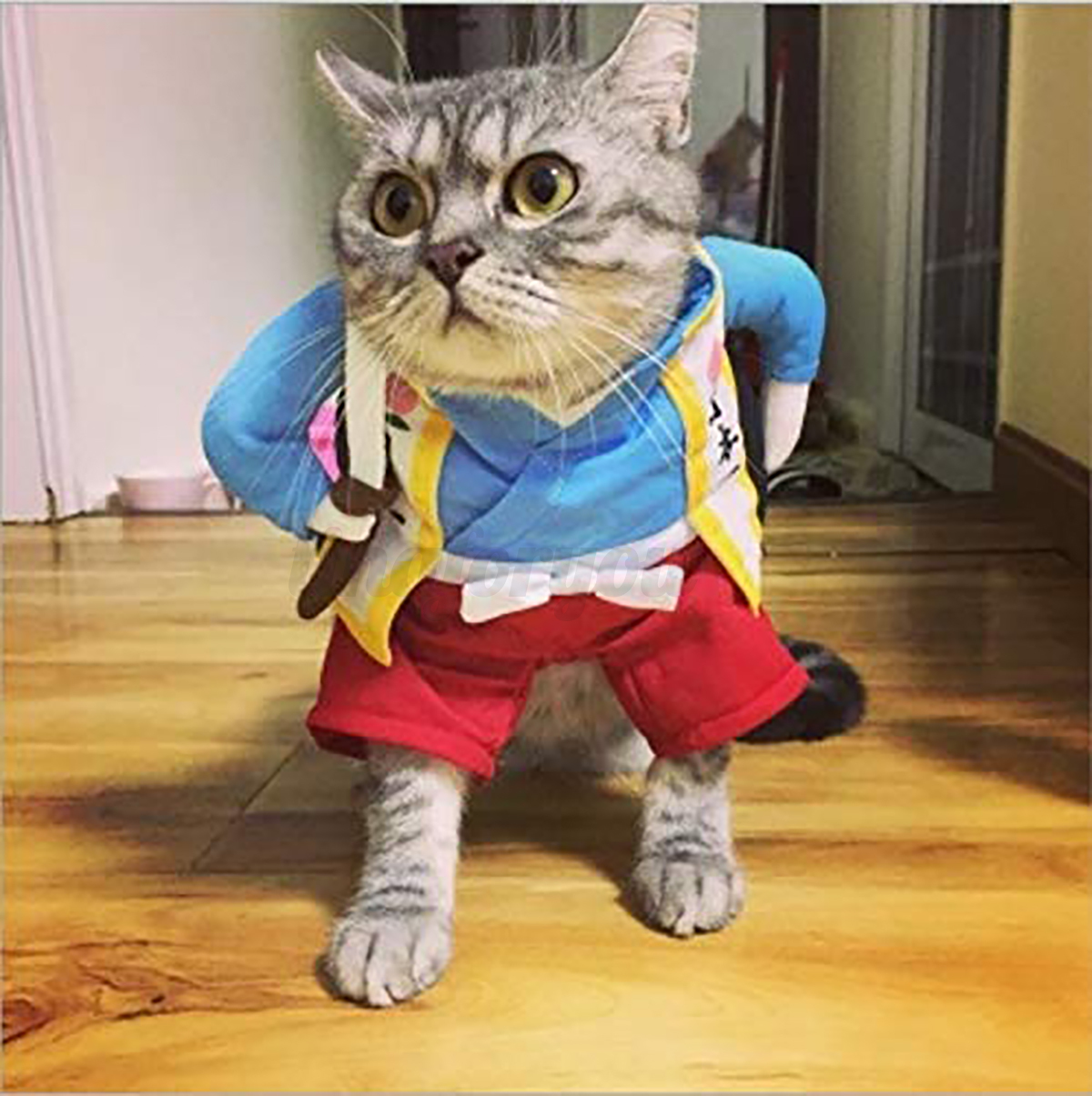 Cat-Dog-Tops-Clothes-Costume-Cool-Christmas-Halloween-Costume-Pet-Clothes thumbnail 9