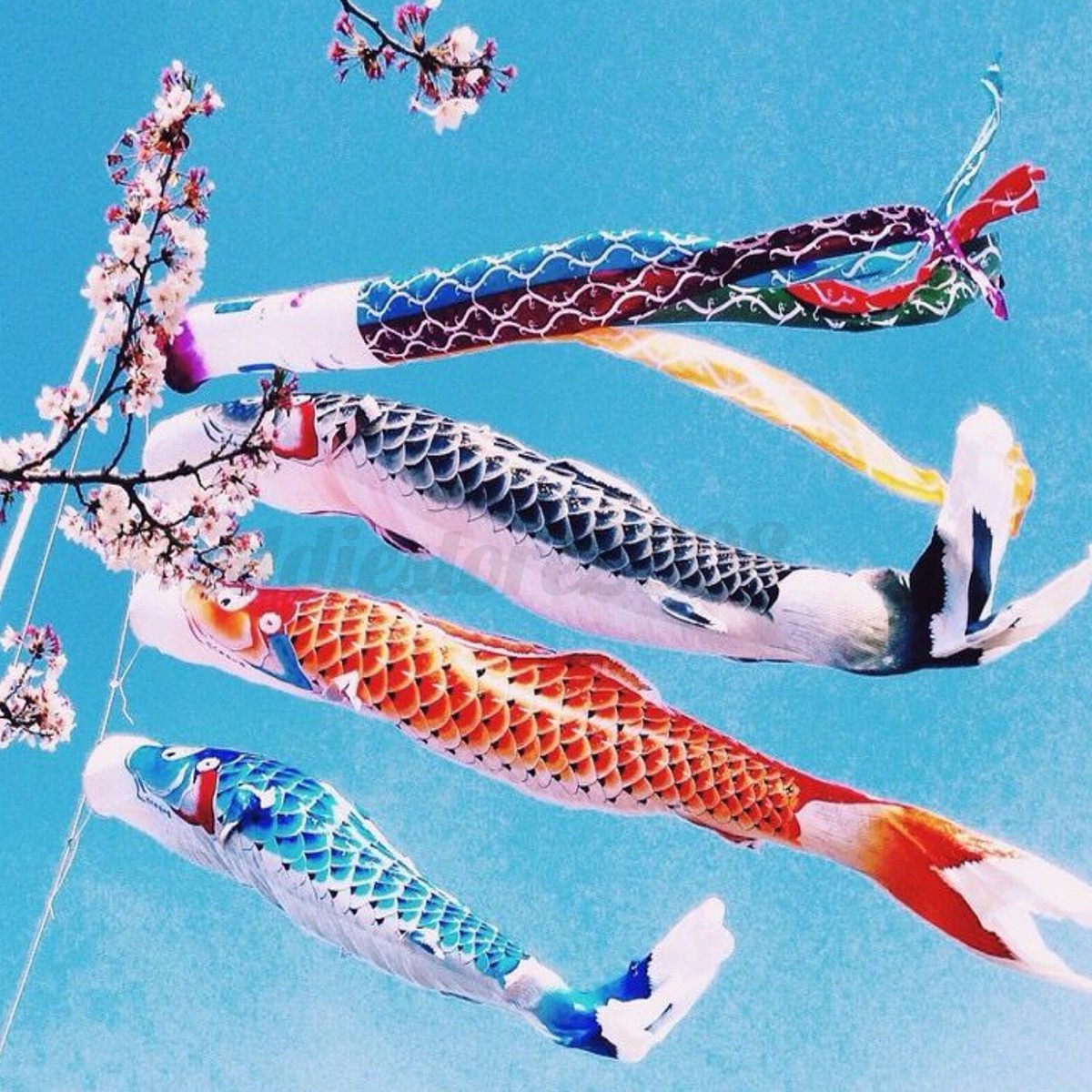 Japanese koi nobori carp wind sock koinobori fish flag for Japanese fish flag