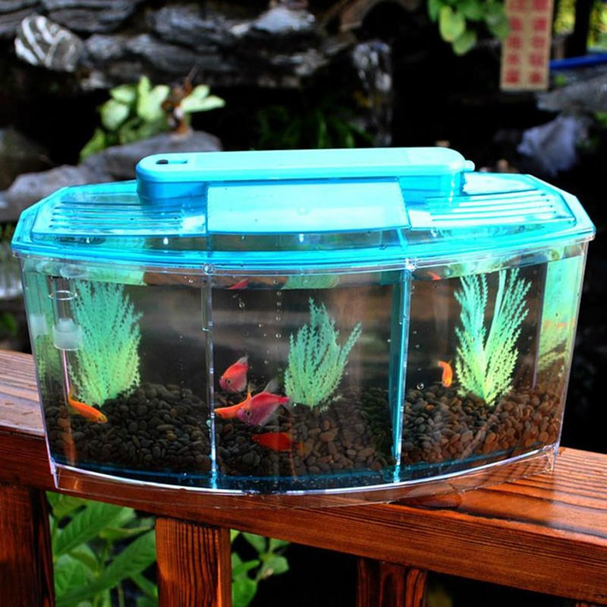 Fish price for aquarium in india - Detail Image